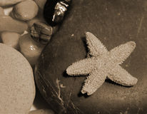 Starfish. On stone Stock Images