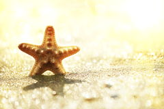 Starfish Royalty Free Stock Photography