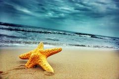Starfish stockfotografie