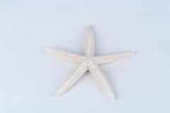 Starfish Imagens de Stock Royalty Free