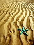 Starfish on sandy beach. Green starfish on the rippled sand of a beach Royalty Free Stock Images