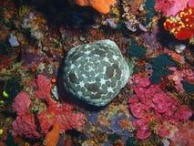starfish Стоковое Изображение RF