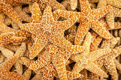 Starfish Lizenzfreie Stockfotos