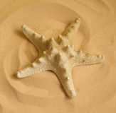 Starfish. On the beach royalty free stock image