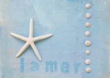 starfish Стоковая Фотография