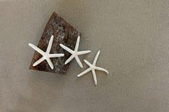 starfish Стоковое Изображение