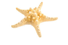Starfish. Isolated starfish on whote background Royalty Free Stock Photos