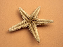Starfish. Single reversed starfish Stock Photography