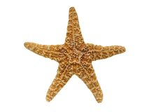 Starfish stockbilder