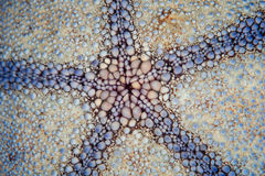 Starfish Abstract Royalty Free Stock Photography