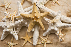 Starfish Abundance. A nice collection of starfish photographed in warm tones Royalty Free Stock Photography