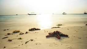 Starfish on african seashore with boats in ocean on the background, timelapse stock video