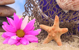 Starfish And Flower Stock Photos