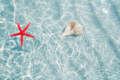 Starfish And Seashell In Clea White Sand Beach