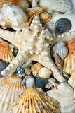 Starfish And Seashells Background Royalty Free Stock Photography