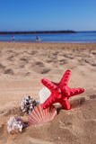 Starfish ans seashells on sea shore Stock Image