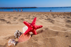 Starfish ans seashells on sea shore Stock Photos