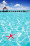 Starfish as summer symbol in tropical beach Stock Image