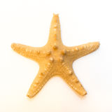 Starfish (Asterias rubens) from the North Sea isolated in front of white background Royalty Free Stock Photos