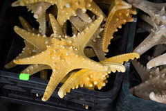 Starfish (Asteroidea) at market. Stock Photography