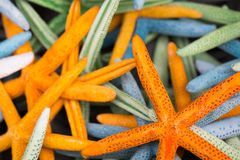 Starfish (Asteroidea) for sale at market. Royalty Free Stock Image