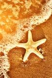 Starfish auf dem exotischen Strand, Meereswogen bei warmem Sonnenuntergang. stockfotografie