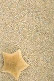 Starfish auf dem Sand Stockfotografie
