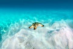 Starfish auf dem Sand stockfotos