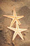 Starfish auf dem Sand Stockfoto