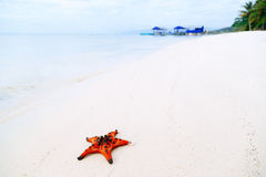 Starfish auf dem Sand Lizenzfreie Stockfotos