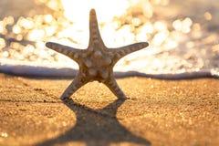 Starfish auf dem Sommerstrand Stockbilder