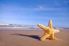 Starfish auf dem Sommerstrand stockfotografie