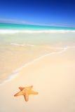 Starfish auf dem Strand Lizenzfreies Stockbild