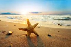 Starfish auf dem Strand lizenzfreie stockbilder