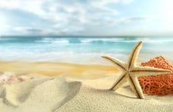 Starfish auf dem Strand Stockfoto