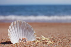 Starfish auf dem Strand Stockfotografie