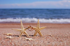 Starfish auf dem Strand Stockbild