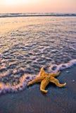 Starfish auf dem Ufer Stockfotos