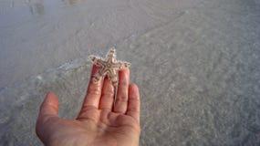 Starfish auf der Hand Stockbild