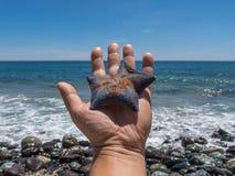 Starfish auf der Hand Mehr in meinem Portefeuille stockfoto
