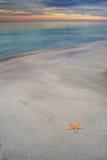 Starfish auf einem sandigen Strand stockbild
