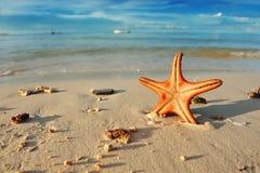 Starfish auf einem Strand Lizenzfreies Stockfoto