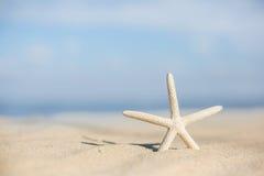 Starfish auf einem Strandsand Stockbilder