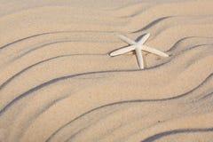 Starfish auf einem Strandsand Lizenzfreies Stockbild