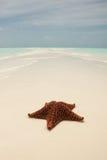 Starfish auf einer Sandbank Lizenzfreies Stockbild