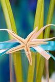 Starfish auf Farbband Lizenzfreie Stockfotos