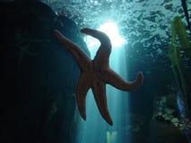 Starfish auf Glas Lizenzfreie Stockfotografie