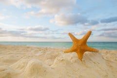 Starfish auf goldenem Sand setzen mit Wellen im weichen Sonnenunterganglicht auf den Strand Lizenzfreies Stockfoto