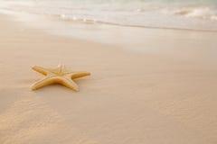 Starfish auf goldenem Sand setzen mit Wellen im weichen Sonnenunterganglicht auf den Strand Lizenzfreie Stockfotografie
