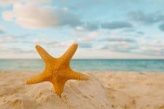Starfish auf goldenem Sand setzen mit Wellen im weichen Sonnenunterganglicht auf den Strand Lizenzfreie Stockfotos